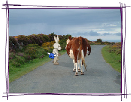 Clever Bunny Talking to a Cow on a Mountain Road in Pembrokeshire
